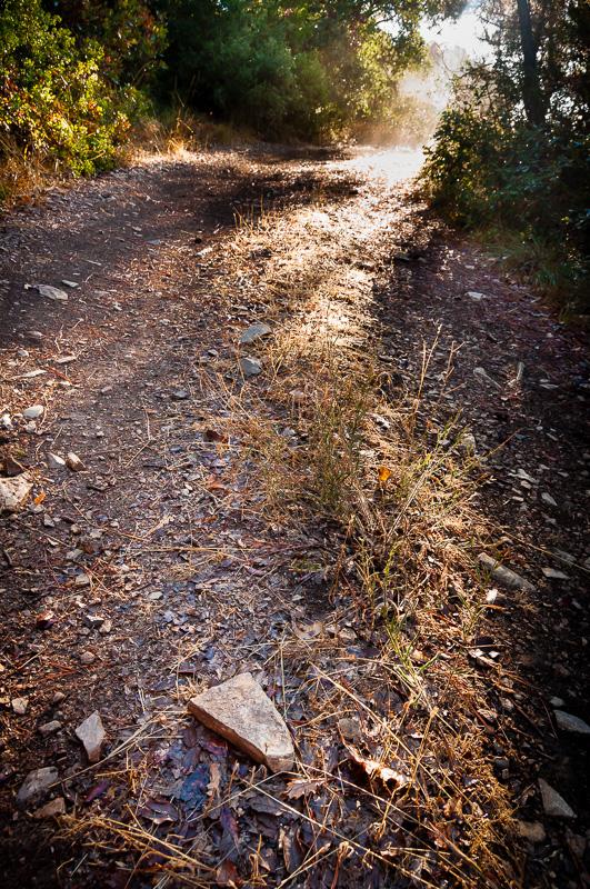 Detall d'un dels senders de la ruta.